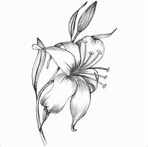 Tiger Lily Flower Drawing at GetDrawings.com | Free for ...