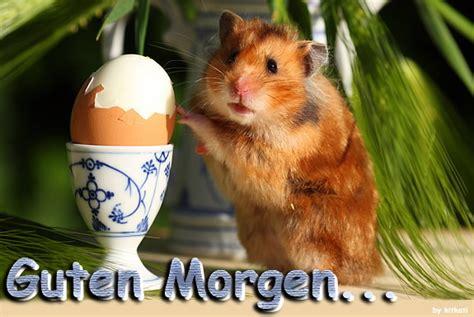 Bilder Für Die Küchenwand by Guten Morgen Guten Morgen Bild 23980 Gbpicsonline