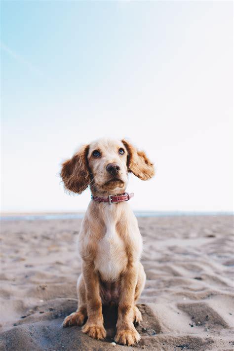 dog images   pictures  unsplash