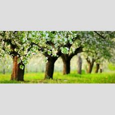 How To Identify Fruit Trees Doityourselfcom