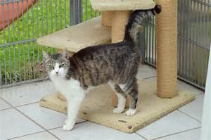 Katzen Fernhalten Von Möbeln : tierheim eschwege katzen ~ Michelbontemps.com Haus und Dekorationen