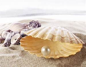 Sea beautiful shell with white pearl inside wallpapers and ...
