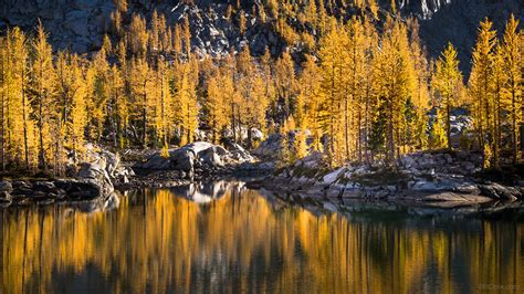 forest scenes larch evergreens basin enchantment favorite habitat feature devlin bill washington credit flickr user