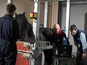 Equine veterinary learning resources   IMV imaging USA