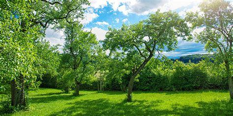 wie lange darf bäume schneiden b 228 ume schneiden bis wann news neuigkeiten baumpflege k hn
