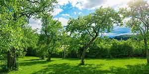 Bäume Für Kübel : pflanzzeit f r b ume wann am besten b ume pflanzen ~ Michelbontemps.com Haus und Dekorationen