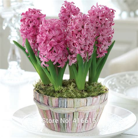 aliexpress buy garden hyacinth pink pearl bulb