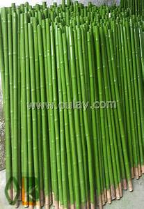 Plastic Coated Bamboo-Oulay Bamboo Industry