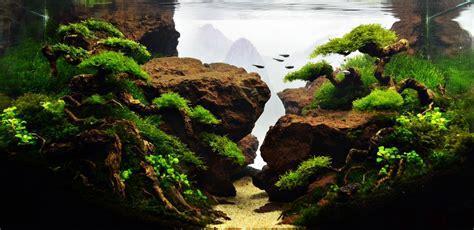 Driftwood Aquascape by 7 Aquascape Bonsai Tree Driftwood Ideas Aquascape