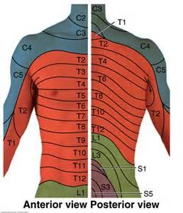 Cervical Thoracic Spine Dermatomes