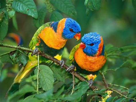 beauty secrets and health tips worlds most beautiful birds