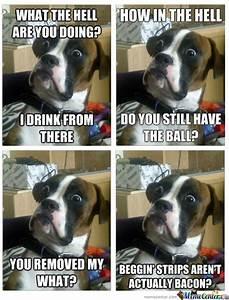 Shocked Dog Meme | www.pixshark.com - Images Galleries ...