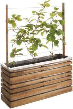 contemporary planters images potted plants