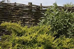 Sichtschutz Natrlich Gartenhecke With Sichtschutz