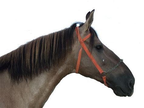 campolina horse weneedfun