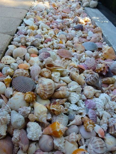 Decorating Ideas Using Seashells by Tips For Decorating Your Yard With Seashells I Shelling