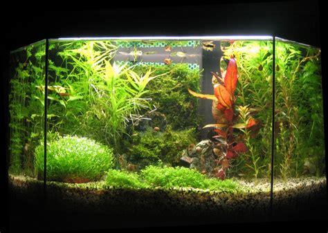 message d absence bureau amenagement aquarium eau douce 28 images am 233