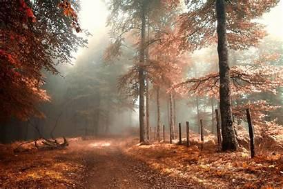 Forest Foggy Autumn Fog Fall Path Background