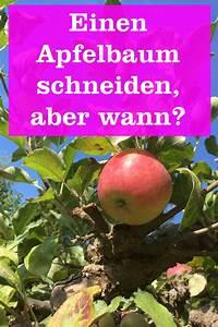 Apfelbaum Schneiden Wann : wann schneidet man einen apfelbaum der garten ratgeber ~ A.2002-acura-tl-radio.info Haus und Dekorationen
