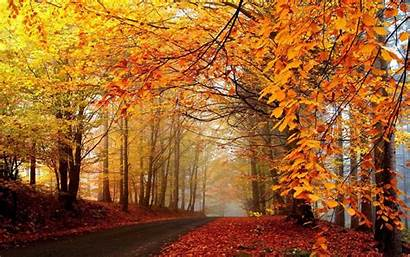 Scenery Autumn 4k