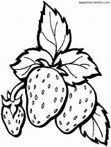 Strawberry Coloring Pages Plant Fruit Drawing Printable Strawberries Template Fresh Templates Sketch Sherriallen Getdrawings sketch template