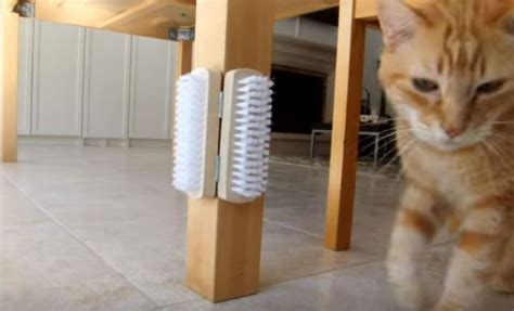 repulsif pour chat exterieur faire soi meme fabriquer soi m 234 me un grattoir pour chat