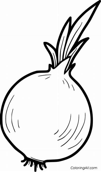 Onion Coloring Pages Printable Vector Vegetable Paper