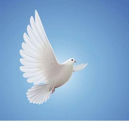 Symbols Peace Holy Spirit Christian Jesus Dove