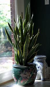 Grow, Fresh, Air, At, Home, With, Easy, Indoor, Plants