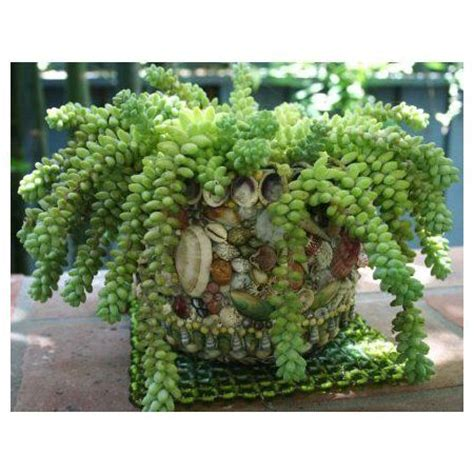 succulent plants poisonous cats keeping your pets safe 10 non toxic house plants for dogs pets and put together