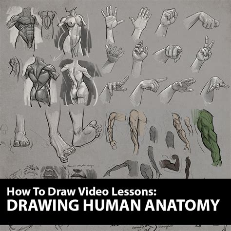 figure drawing tutorial drawing human anatomy lessons