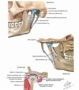 Temporomandibular Joint  Tmj