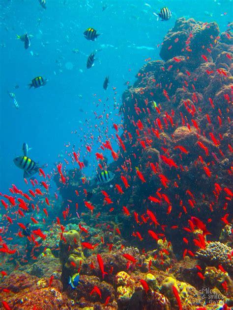 Dive Sipadan by Diving In Sipadan Island One Of The Best Dive Spots In