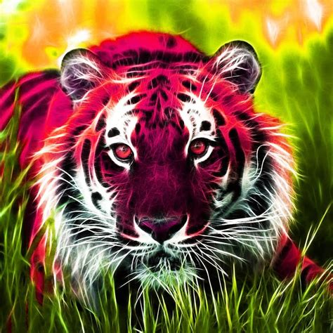 animals wallpaper  hd  apk  android