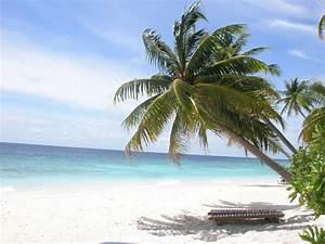 Bilder Von Palmen : palmen bilder news infos aus dem web ~ Frokenaadalensverden.com Haus und Dekorationen