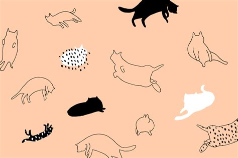 aesthetic cat wallpapers top  aesthetic cat