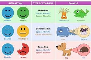 Species Interactions   BioNinja