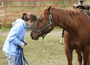 Horse  U2013 Shawano County