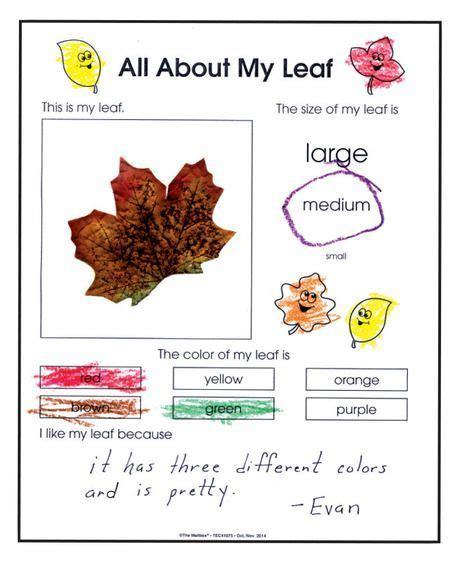 82 best leaf images on fall preschool 642 | 8fa7e14aa9f21a5d824c8c9f097a4053 kinder science kindergarten science