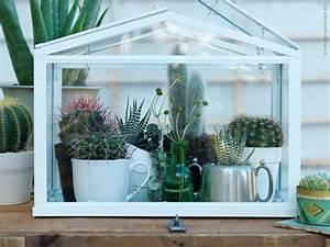 Serre Pour Plante : ma serre d int rieur jardin exotique croissance et solide ~ Premium-room.com Idées de Décoration