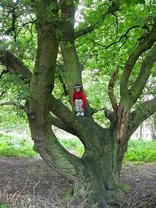 Foret De Sherwood : angleterre for t de sherwood belle marienne centerblog ~ Voncanada.com Idées de Décoration