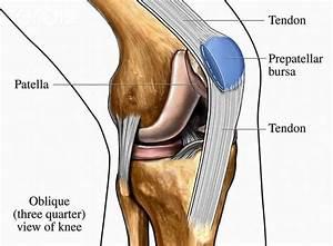 34 Diagram Of The Human Knee