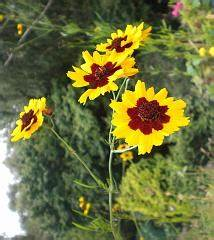 Blumen Im Juli : zur ck zur hauptseite blumen im juli ~ Lizthompson.info Haus und Dekorationen