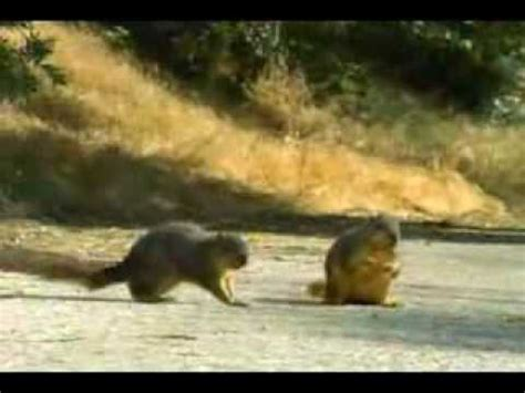 geico car insurance squirrel commercial youtube
