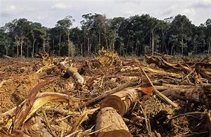 Nimbus Eco | Deforestation and Pollution Facts