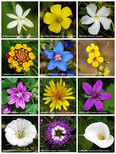 different types of flowers different types different types of flowers