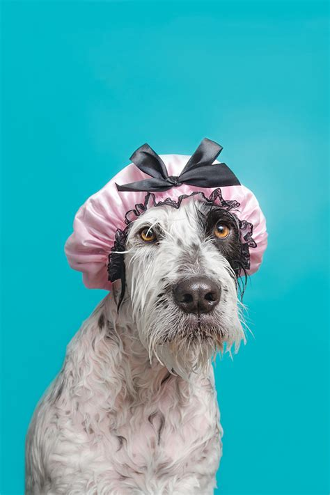 funny   wet dogs photographed  sophie gamand