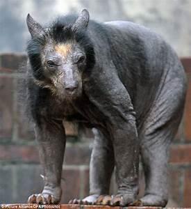 Hairless bear looks horrendous | Today I Learned Something New