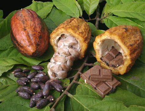 Nonsolodolciricette: Cacao e  Cioccolata
