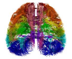 Scientists Create Wiring Diagram For Mouse Brain